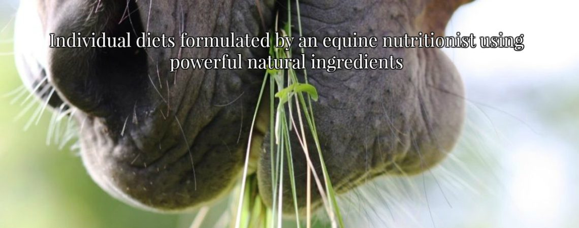 equine, horse nutrition, equine health, diets, individual