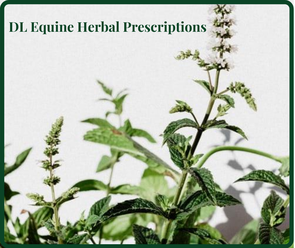 Herbal Prescriptions DL Equine