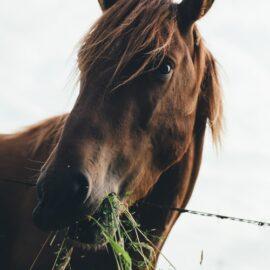 Equine herbal medicine