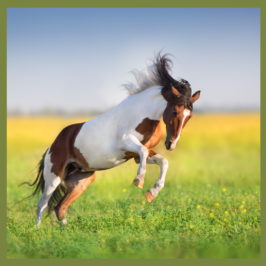 Autumn flush grass and your horse behaviour and gut