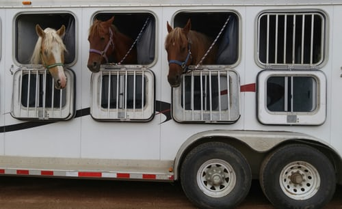 Feeding horses when travelling away DL Equine