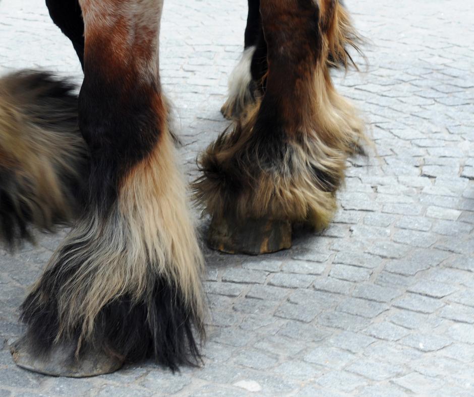 Winter hoof and skin health